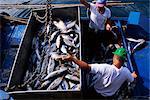 Fishermen with catch, Santiago, La Gomera, Canary Islands, Spain, Europe