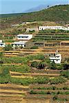 Petites maisons et des champs en terrasse près de Las Hayas dans le sud-est de La Gomera, Iles Canaries, Espagne, Europe
