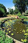 Botanical Gardens, Peradeniya, Kandy, Sri Lanka, Asia