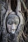 Statue de Bouddha dans l'arbre de Bodhi Roots, Temple Mahathat, Ayutthaya parc historique, Ayutthaya, Thaïlande