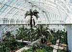 Innere des Temperate House, 1982 renoviert, Kew Gardens, UNESCO Weltkulturerbe, Greater London, England, Vereinigtes Königreich, Europa