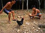 Deux jeunes hommes Iban formation de combats de coqs sous leur longère sur la rivière Katibas, Sarawak, Malaisie, Asie du sud-est, Asie