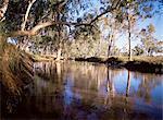 Gum trees beside Hann River, central Gibb River Road, Kimberley, Western Australia, Australia, Pacific