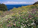 Fleurs de printemps d'avril, la réserve naturelle de Zingaro, nord-ouest de la région, l'île de Sicile, Italie, Méditerranée, Europe