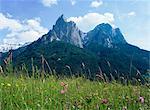 Mai fleurs et Mont Sciliar (Sclern), Dolomites, Trentin-Haut-Adige (Tyrol du Sud), Italie, Europe