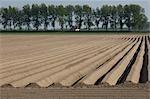 Plowed Field, Kats, Zeeland, Netherlands