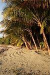 Palm Trees on Private Beach in Mal Pais, Nicoya Peninsula, Costa Rica