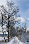 Path in Winter in Schwenninger Moos, Baden-Wurttemberg, Germany