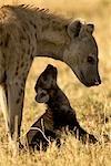 Mother and Young Hyena, Masai Mara, Kenya, Africa