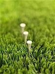 Golf-Tees im Gras
