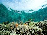 Coral reef scene.