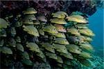 Mass of schooling fish.