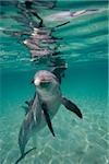 Dancing dolphin.