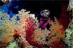 Scuba diver and soft corals.