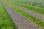 Gros plan du parcours des champ de maïs