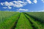 Parcours des champ de maïs