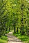 Pathway Through Forest, Aschaffenburg, Bavaria, Germany