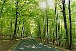 Weg durch Buchenwald Baum im Frühling, Spessart, Bayern, Deutschland
