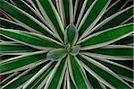 Close-up of tropical plant, Singapore