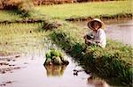 Thaïlande, agriculteur de repos après la plantation de plants de riz.