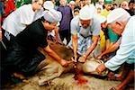 Malaisie, Kuala Terengganu, musulmans, coupant la tête de vache à Tengku Tengah Zaharah mosquée pour célébrer Hari Raya Haji.