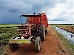 rice pickup truck on field