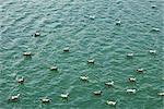 Troupeau de mouettes au repos dans la mer, vue grand angle