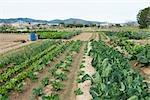 Variété de légumes de plus en plus dans le champ