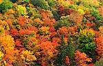 Arbres d'automne, automne, changeant de couleur, Forest, États-Unis