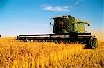 Wheat Harvesting, Australia