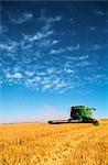 Blé récolte, Australie
