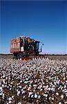 Cotton Harvesting, Australia