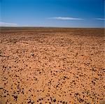 Sturt Desert Stoney, Australie