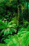 Forêt pluviale tempérée, Otway National Park, Australie