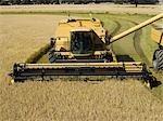Riz à la récolte, Australie
