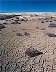 Terre fissurée, sèche le lit du lac, France