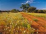 Wooleen Station, Murchison, Western Australia, Australie