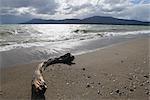 Beach at Lake Fagnano, Tolhuin, Tierra del Fuego, Argentina
