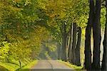 Sentier asphalté à travers la forêt, Odenwald, Hesse, Allemagne