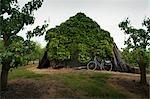 Ivy Covered Shed, Kapelle, Zeeland, Netherlands