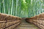 Chemin d'accès, Adashino Nembutsu-Ji, Arashiyama, Kyoto, Kansai, préfecture de Kyoto, Honshu, Japon