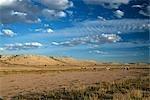 Long Shot of Gemsbok (Oryx gazella) Herd Standing on Desert Plain