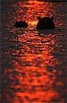 Portrait of Hippopotamus (Hippopotamus amphibius) Pair Emerging From Water at Sunset
