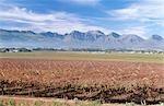Vignoble et montagne panoramique