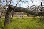 Tronc d'arbre formant un cadre pour une maison de ferme et un champ de fleurs