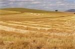 Vue sur un paysage de terres agricoles avec les montagnes en arrière-plan