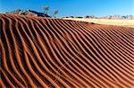Rippled Dune Scenic