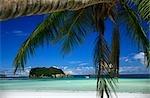 Île vierge et un palmier