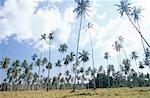 Palm Tree Forrest