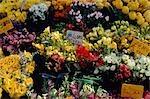 Assortiment coloré de fleurs à vendre au marché de Galluzzo